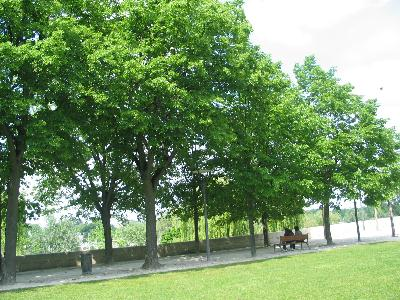 alignement arbres ds parc